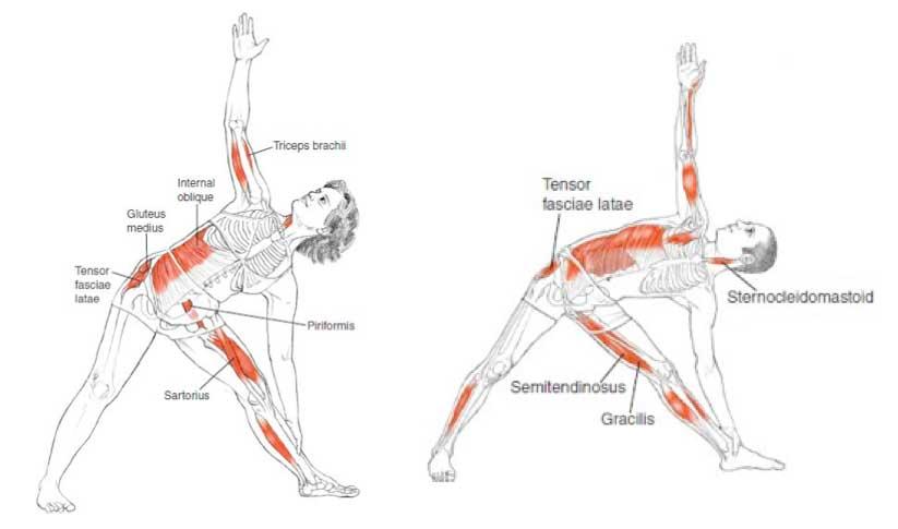 pure-yoga-alineacion-2